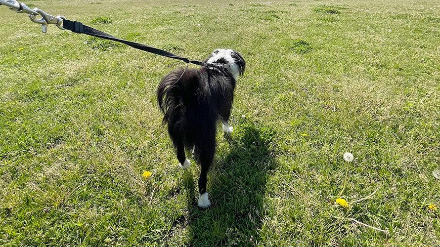 犬と河原散歩