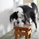 片パンダ犬 凪の日記