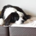片パンダ犬 凪のブログ