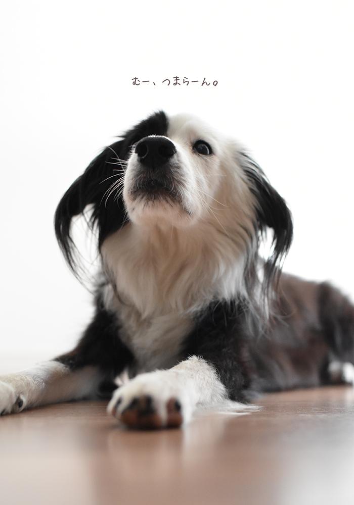 キッチン大好き片パンダ犬