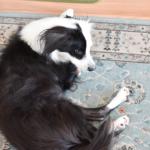 片パンダ犬ブログ