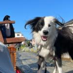 犬と畑のある暮らし